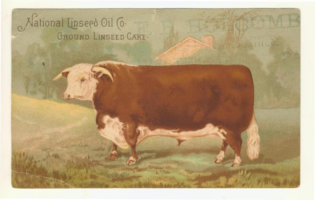 Front pf a Victorian postcard promoting the health benefits of feeding linseed cake to beef, horses and other animals.