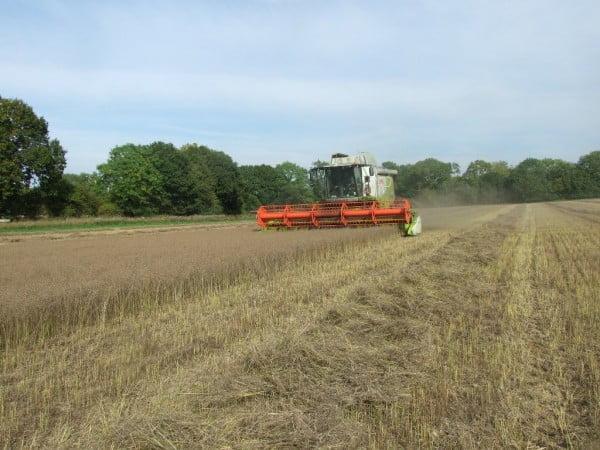 Flax harst modern 1-600x450