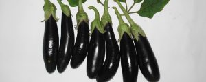 Aubergines for baba ganoush recipe.